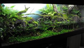 what u0027s your aquascape style cflas
