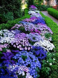 Purple And Blue Flowers Blue Flowers Picmia