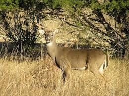 585 best animals images on pinterest animals wild animals and