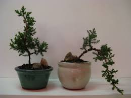 products and services bonsai bliss bonsai bliss