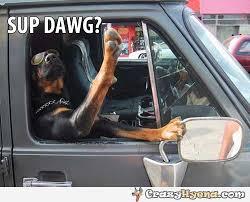 Dog In Car Meme - sup dawg