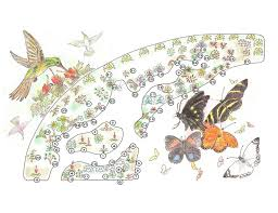hummingbird clipart rainforest butterfly pencil and in color