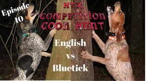 bluetick coonhound fun facts english vs bluetick coonhound episode 10 coon hunting youtube