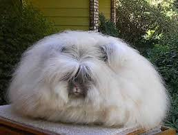 Kims Rabbit Hutch 13 Best Images About Angora On Pinterest Rabbit Cages Homemade