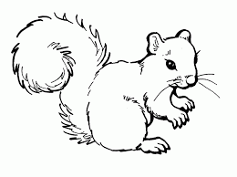 image detail squirrel sunny free printable coloring