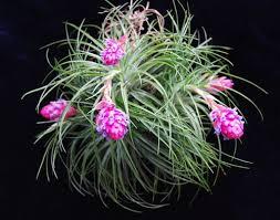 beautiful indoor terrarium plants