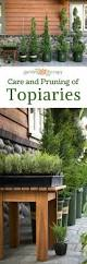 Eugenia Topiary Care And Pruning For Decorative Topiaries Garden Therapy