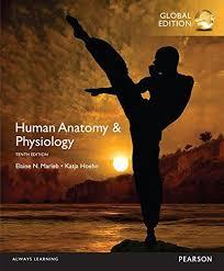 Human Physiology And Anatomy Book 9780321927040 Human Anatomy U0026 Physiology Marieb Human Anatomy