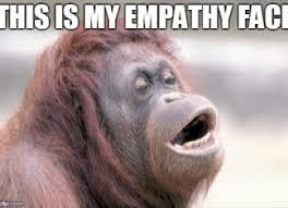 Funny Monkey Meme - funny articles monkey pickles