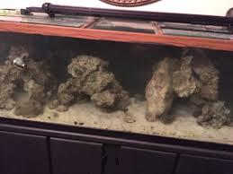 japanese aquascape aquascaping reef keeping austin reef club