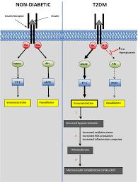 alzheimer u0027s disease and diabetes intechopen