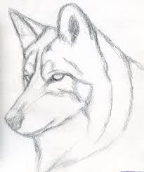 simple wolf sketch wolf drawings pinterest wolf sketch wolf