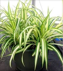 low light houseplants plants that don t require much light indoor plants that do not need sunlight for photos 5 low light