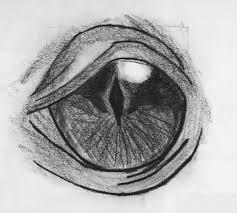 dragon eye sketch peter hamblin