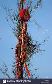 Decorations For Vietnamese New Year by Fire Crackers And Good Luck Decorations Hanging From Bamboo During