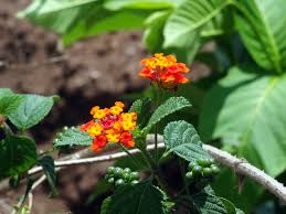 fairy garden plant ideas ambius