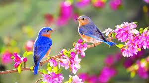 Wallpaper With Birds Spring Bird Desktop Wallpaper With Birds And Flowers Hd In Litle