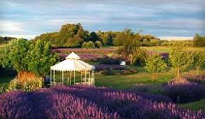 sequim lavender farm weddings events store jardin du soleil