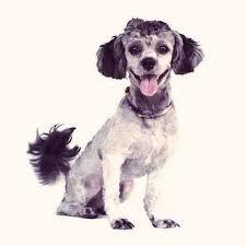 Petmeds Unique Deaf Dog Awareness Week with Christina From