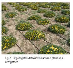 nursery pre conditioning of ornamental plants