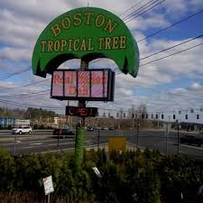boston tropical tree flower outlet closed 16 reviews