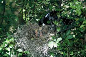 tuis tuis nest hotelroomsearch net