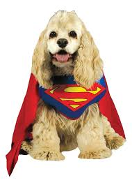 Halloween Costumes Dogs 13 Dogs Superhero Costumes Images Animals