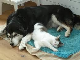 Katze Schlafzimmer Ja Bett Nein Herr Willy Die Katze
