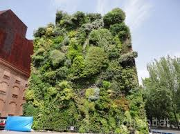 patrick blanc u0027s lush vertical garden is a green oasis in the