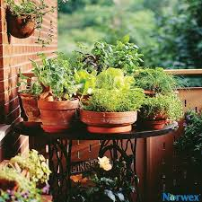 77 best eco gardening images on pinterest backyard ideas