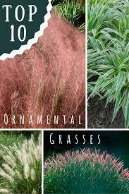 top 10 ornamental grasses for gardens gardening how s