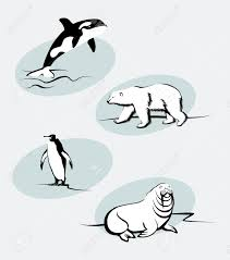 collection of north animals in outline style royalty free cliparts