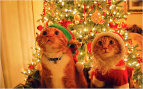 10 pets who are hopped up on christmas spirit petful