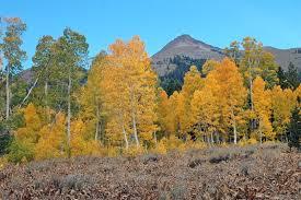 hope valley california alive fall color u2022 lake tahoe guide