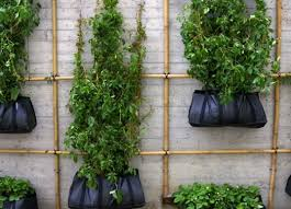 climbing green wall crafted from bamboo scaffolding u0026 hanging bags