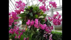 Botanical Garden Orchid Show 2015 Orchid Show At The New York Botanical Garden I Selected