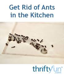 161 best pest control images on pinterest pest control bugs and