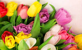 flowers for mothers day fresh cut flowers for mother u0027s day 2016 u2013 tony u0027s
