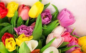fresh cut flowers fresh cut flowers for s day 2016 tony s
