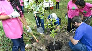 Organize Day Organizing A Tree Planting Project Arborday Org