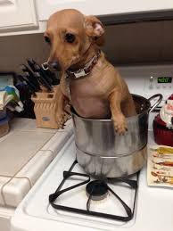 Dog Cooking Meme - i got stuck watching my mom s dog who gets treated better than most