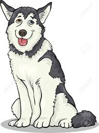 siberian husky clipart siberian husky drawing step by step