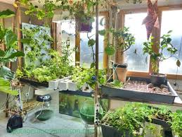 40 best indoor vegetable gardening images on pinterest vegetable