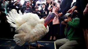 thanksgiving turkey visits the white house briefing room