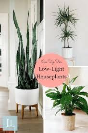 sunlight l for plants 10 houseplants that don t need sunlight low light houseplants low