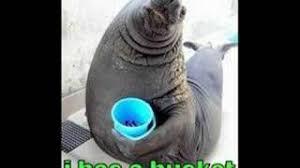 Meme Bucket - i has a bucket youtube