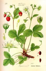 native plant database 596 best vintage postcards illustrations images on pinterest