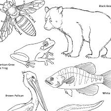 wildlife coloring book sakura of america