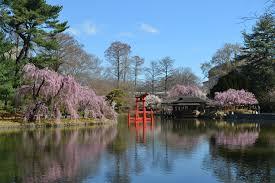 japanese hill and pond garden brooklyn botanic garden