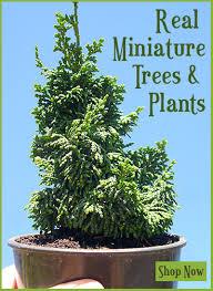 miniature garden trees a visual feast the mini garden guru from